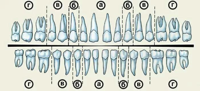 Сколько зубов у алы 118